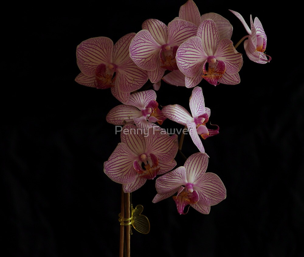 Orchid with lots of veining  by Penny Fawver