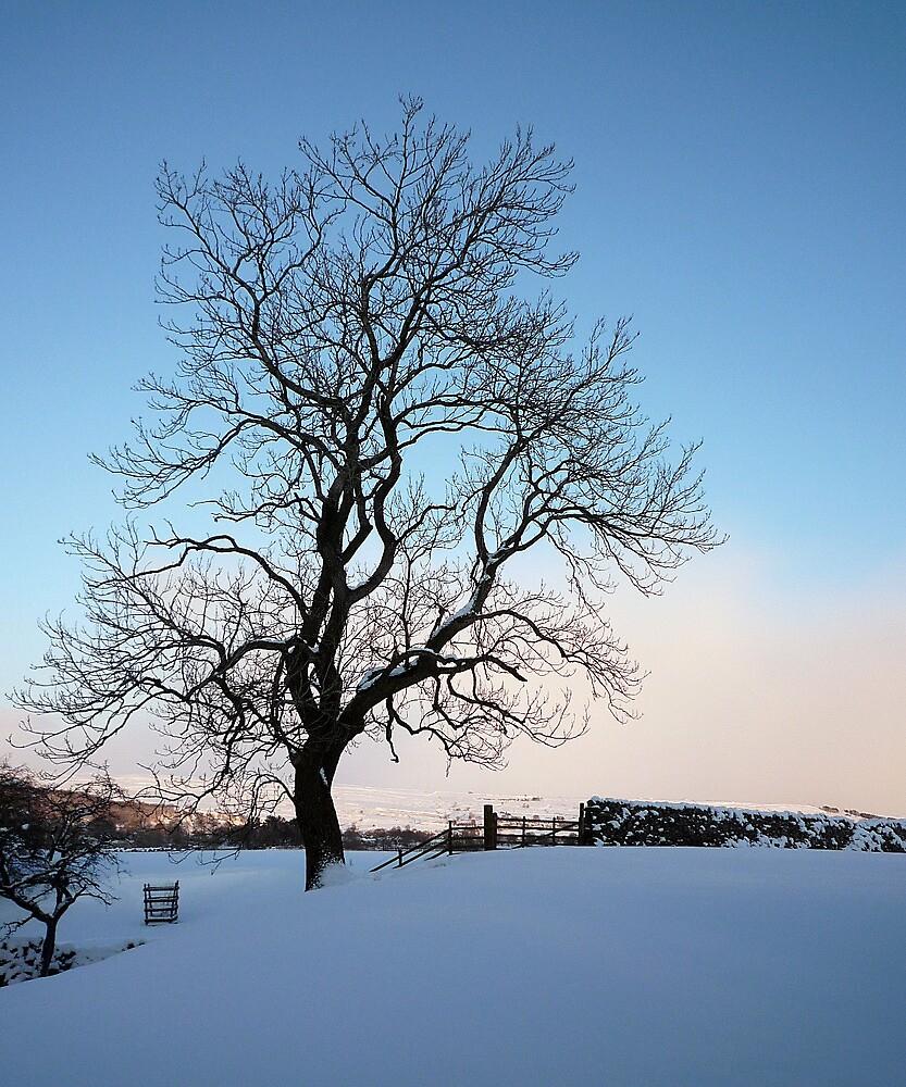 Snowy Wharfedale by Rebecca Mason