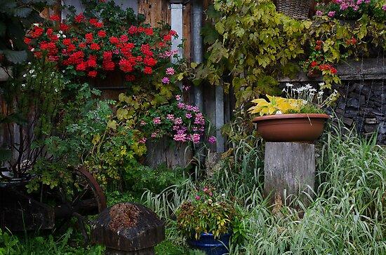 Lush fall garden in Muren, Switzerland by David Galson