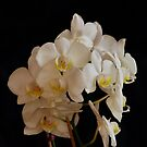 Loaded orchid branch by Penny Fawver