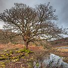 The Tree by JPassmore