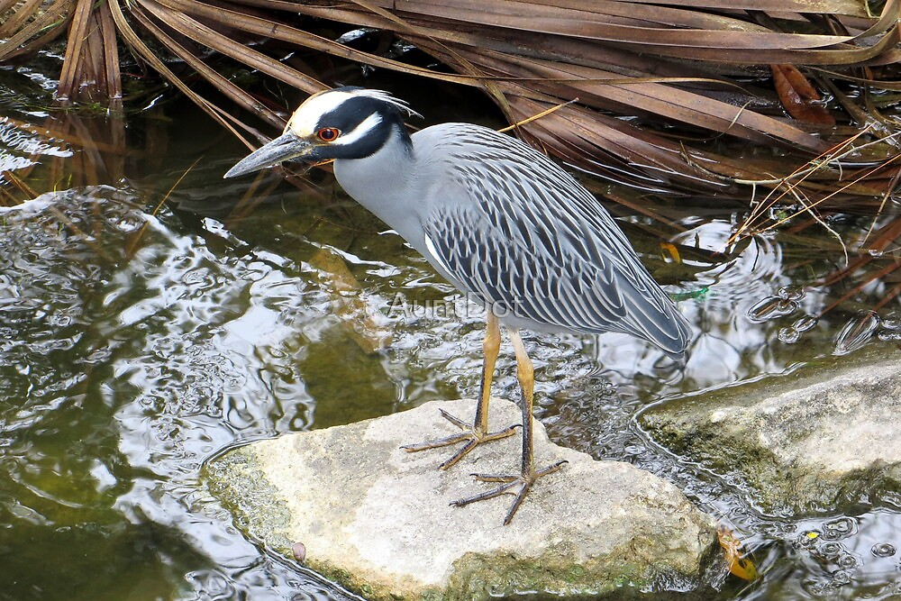A Patient Heron by AuntDot