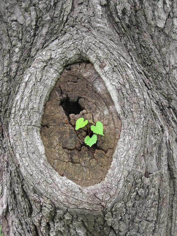 New Life by Kelly Morris