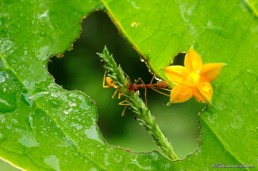 ant and yellow flower on frame by taufiqurrahman