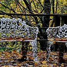 Come Sit For Awhile - Sefton Cottage Mt Wilson NSW by Bev Woodman