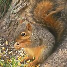 Cutest Little Squirrel by lorilee