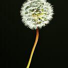 Natures Fireworks by Mick Kupresanin
