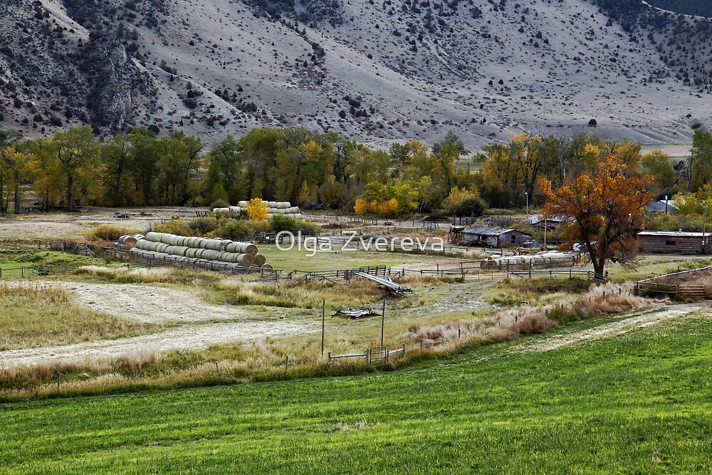 Rural Montana by Olga Zvereva