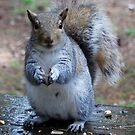 The Smiling Squirrel  by Tori Snow
