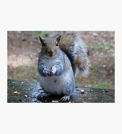The Smiling Squirrel  Photographic Print