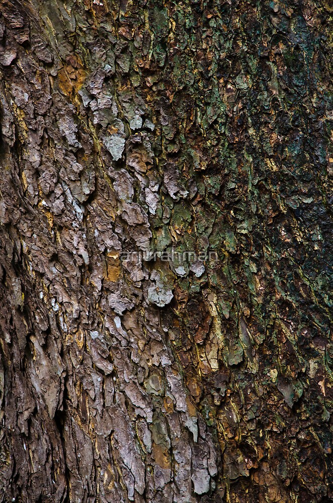 Texture of a tree by arjurahman
