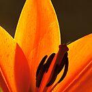 Lily Flower by liza1880