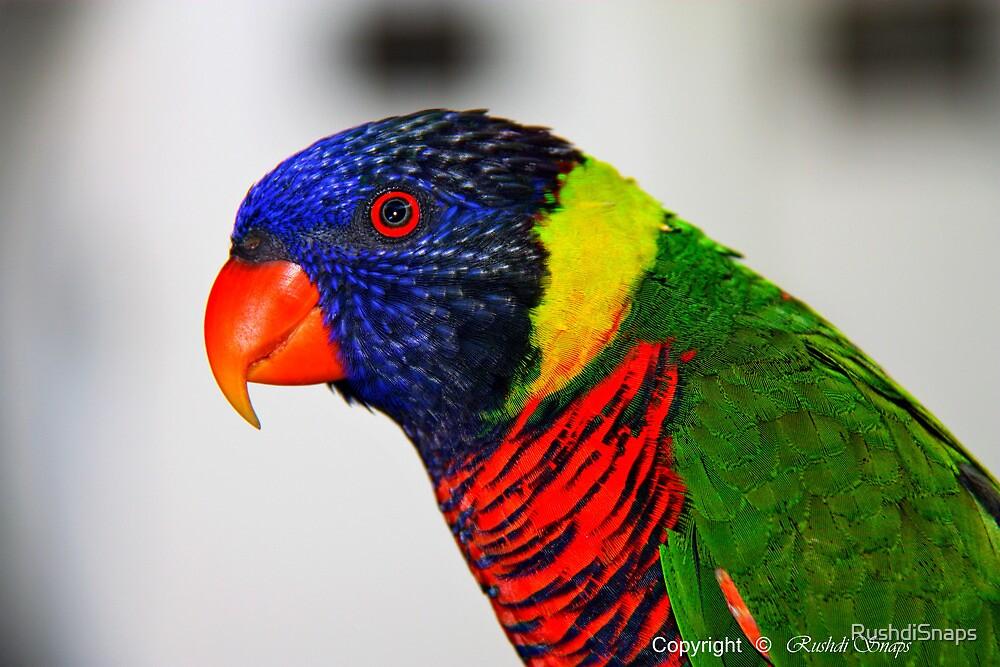BIRD by RushdiSnaps