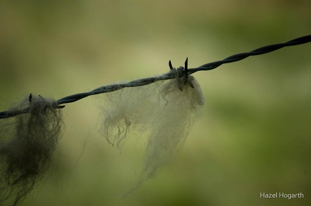 0084  Wool on the Wire by Hazel Hogarth