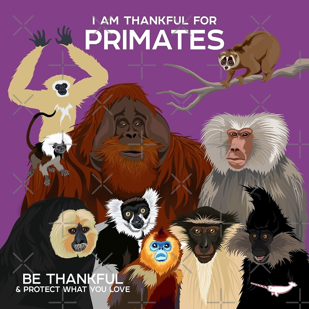 I Am Thankful For Primates by PepomintNarwhal
