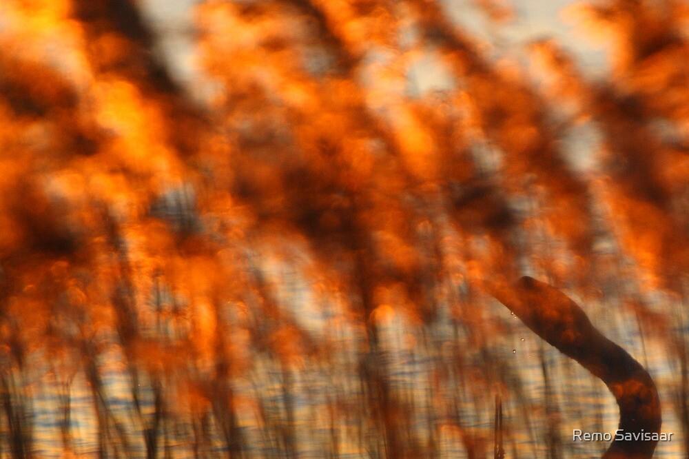 In Flames by Remo Savisaar