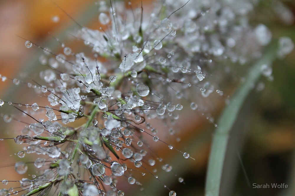 More Water Droplets by Sarah Wolfe