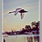 Flying high, high... by KatarinaD