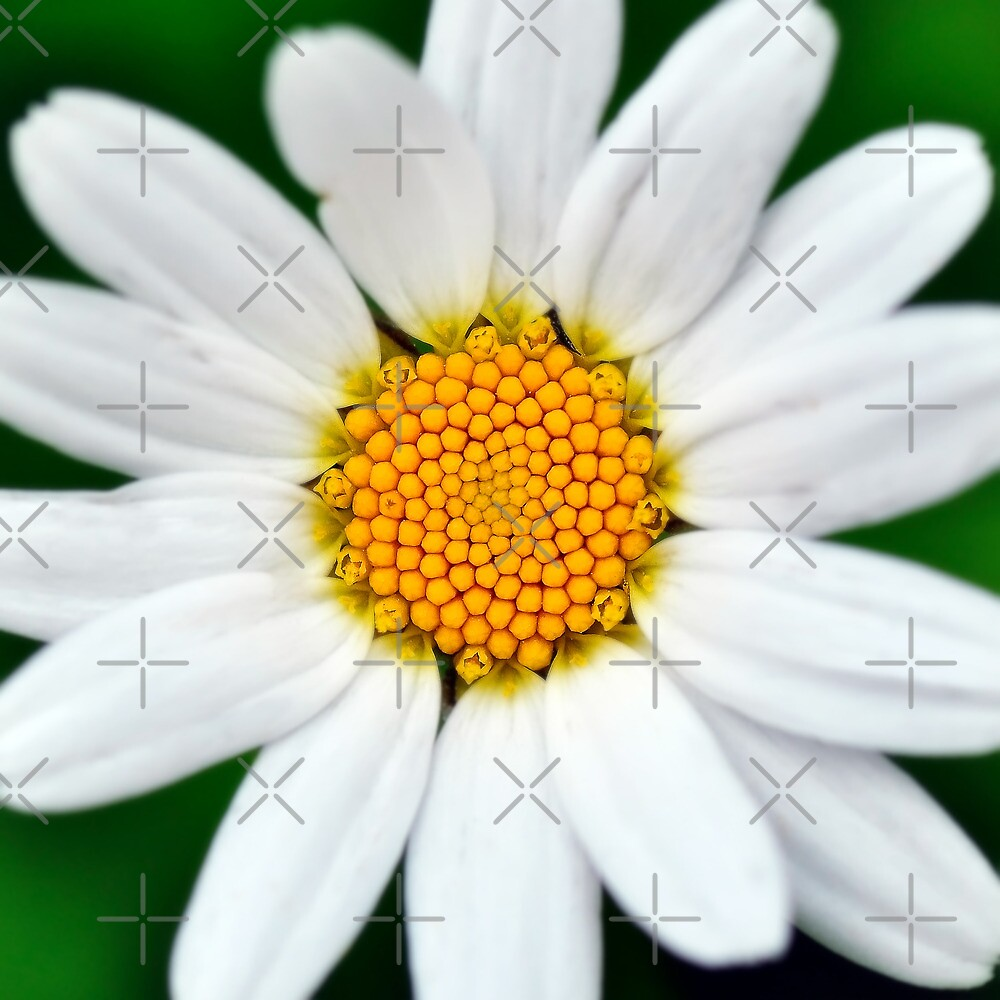 Summer flower by marina63