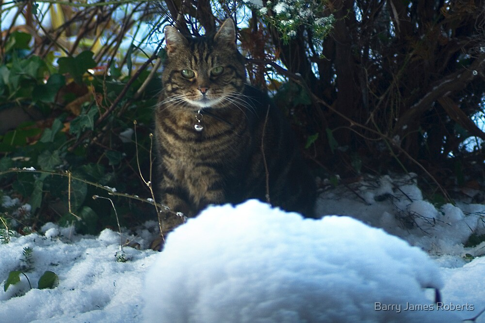 Cat confused by snow by Barry James Roberts