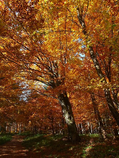 Autumn Forest 2 by MOFS