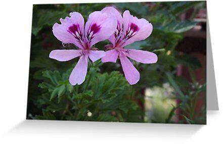 2 Purple Flowers by LiveLoveJessa