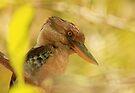 Blue-winged Kookaburra by Ursula Rodgers