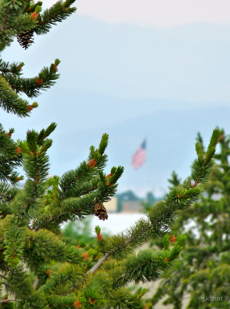 Pine, America by skyhat