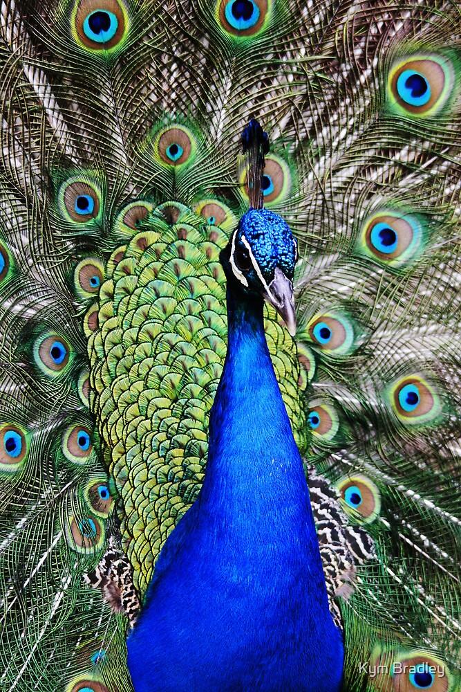 Peacock in full Bloom by Kym Bradley