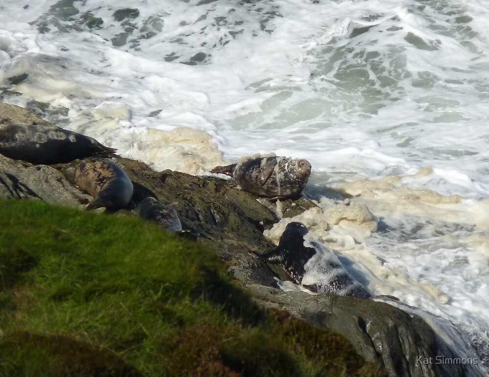 Seals in Sea Froth by Kat Simmons