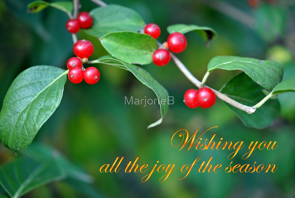 Berries--Holiday Card by MarjorieB