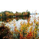 Maine Beauty by Ann Palmieri