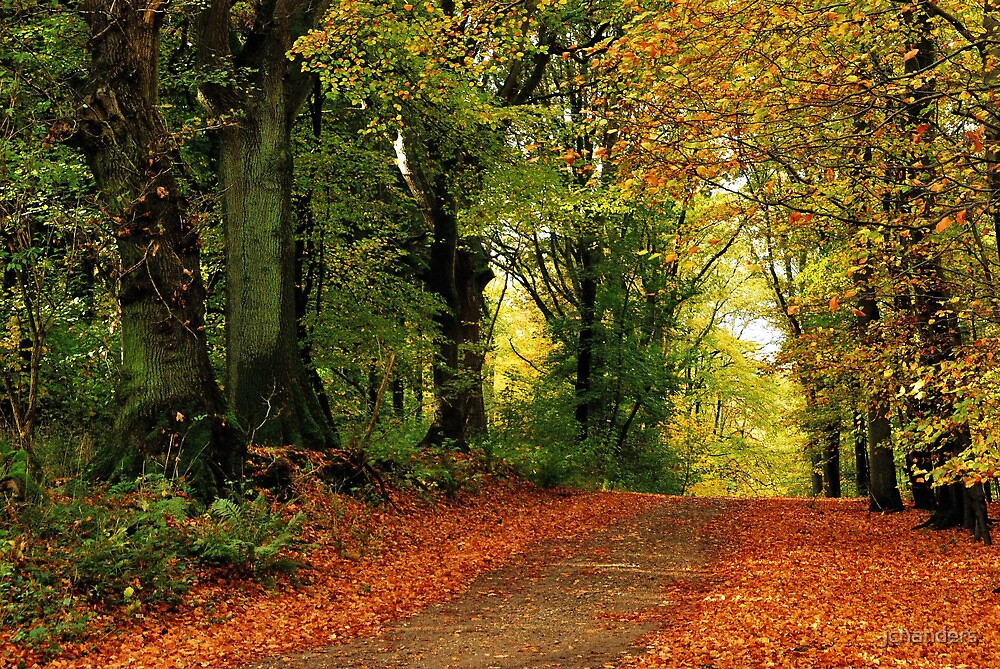 Autumnal return by jchanders