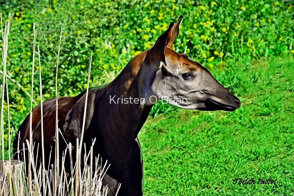 Okapia johnstoni  by Kristen O'Brian