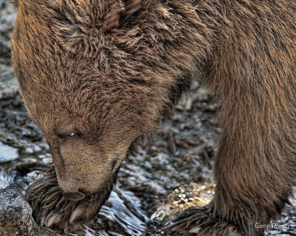 The Cub by Gene Praag