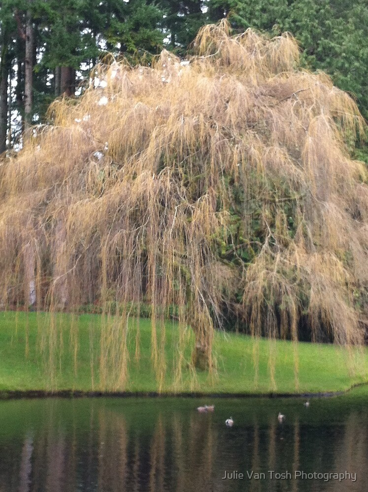 Tree at Bloedel Reserve, Bainbridge Island by Julie Van Tosh Photography
