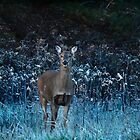 Whitetail Doe on a Frosty Morning by Thomas Young