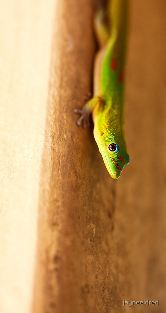 Gold Dust Day Gecko by jayneeldred