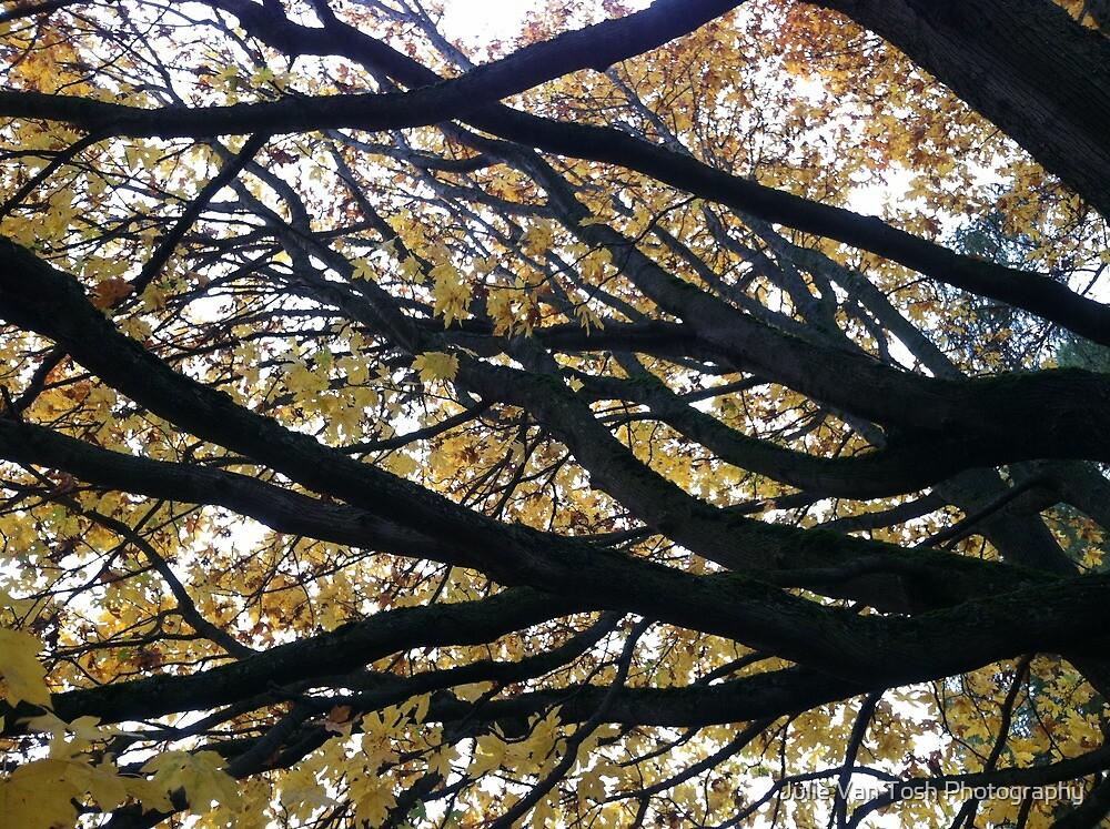 Tree at Green Lake, Seattle, Washington by Julie Van Tosh Photography