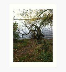 Tree, Green Lake, Seattle, Washington Art Print