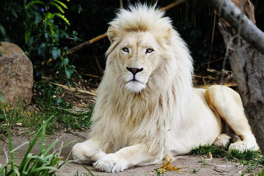 Pride ~ White Lion ~ by Kym Bradley