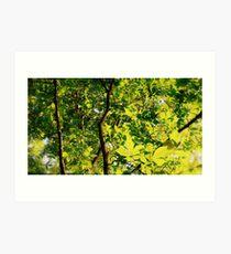 Natural Tree Lighting Art Print