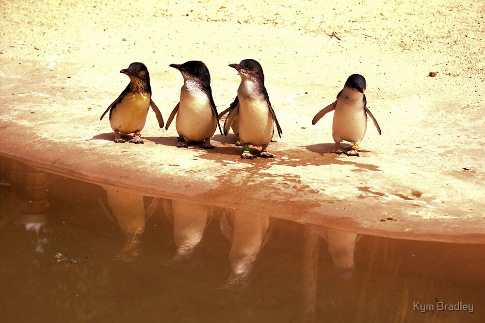 United We Stand ~ Fairy Penguins~ by Kym Bradley