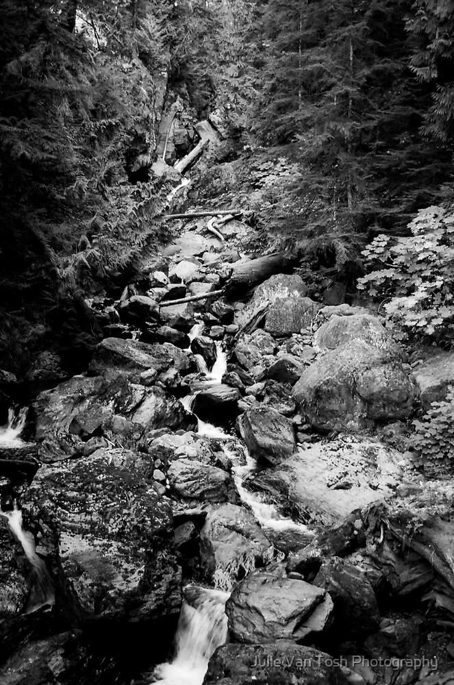 Mt. Baker National Forest, Washington by Julie Van Tosh Photography