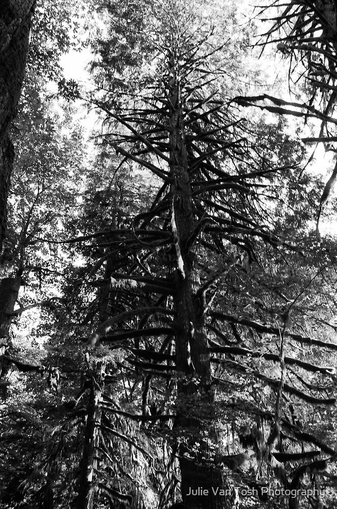 Mt. Baker National Forest by Julie Van Tosh Photography