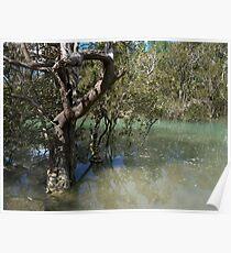 Mangroves..........! Poster