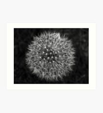 Dandelion Dream Art Print
