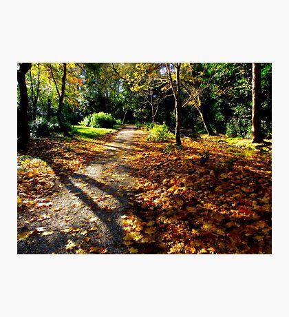 Autumn woodland path. Photographic Print