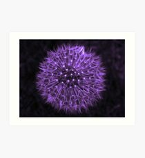 Dandelion Purple Art Print