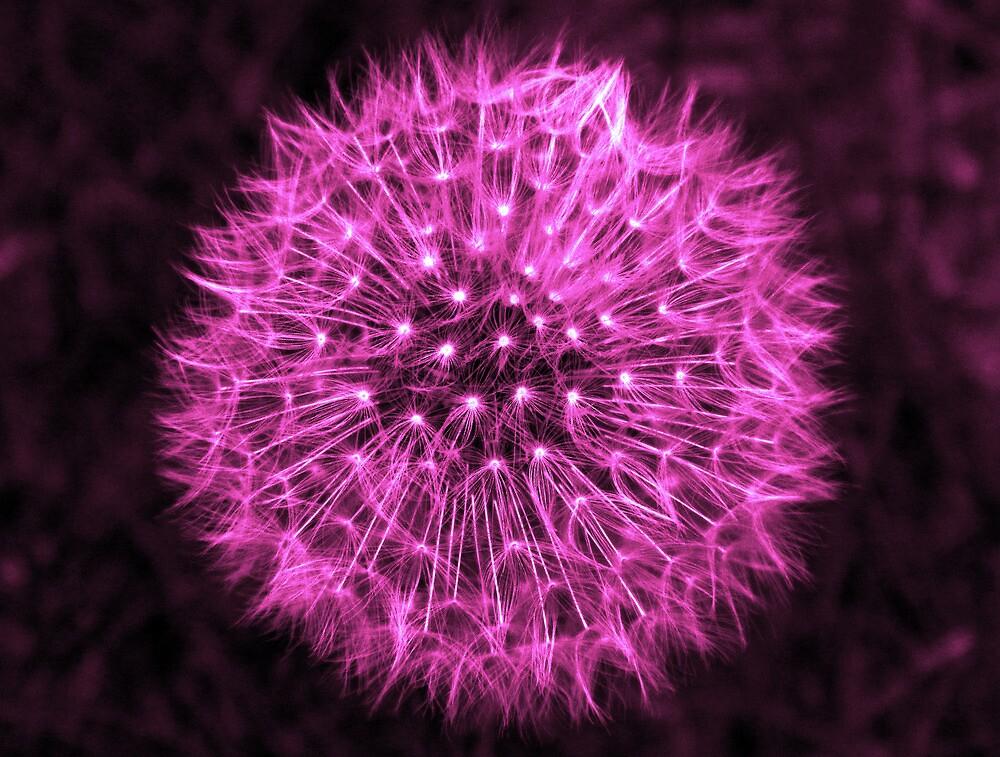 Dandelion Violet by DavidWHughes